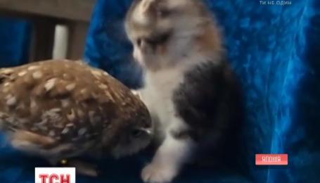 Японські сова і кошеня стали зірками інтернету