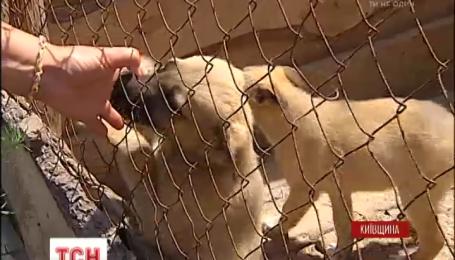 Более двух с половиной тысяч животных оказались на грани выживания
