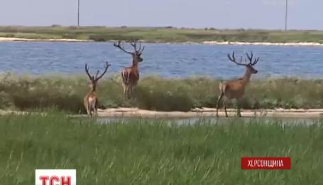 Остров Бирючий, который расположен в Азовском море, вновь открыт для туристов