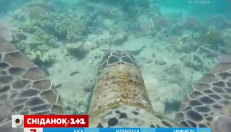 Черепаха провела экскурсию Большим барьерным рифом