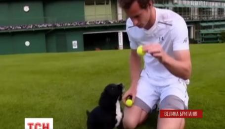 Енді Маррей зняв кумедне відео на підтримку програми навчання службових собак