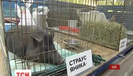Під ГПУ зібралися свині, кури, кози та активісти Межигір'я