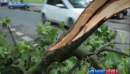 В Польше ликвидируют последствия шквалов и дождей
