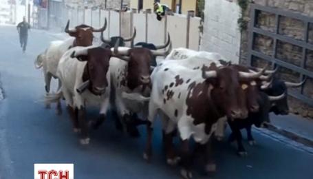 На третий день на фестиваль Сан-Фермин быки ранили четырех бегунов