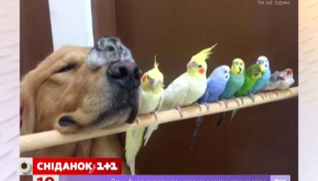 Дружба собаки, хом'яка та папуг підірвала інтернет