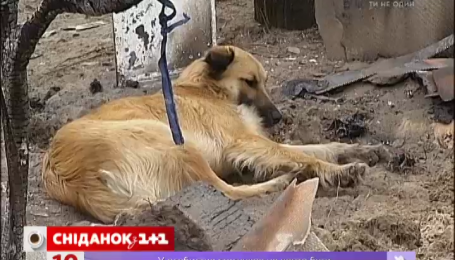 В Украине снова травят животных