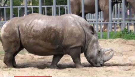 Сьогодні у столичному зоопарку святкують день народження носорога