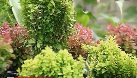 Зеленая изгородь дешевле чем забор