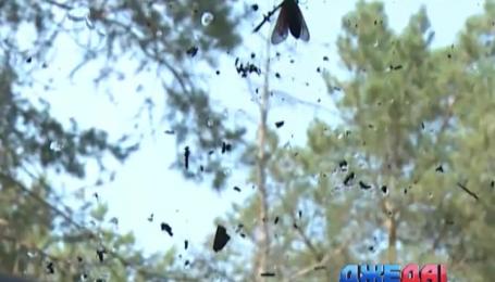 Как правильно отмыть автомобильное стекло от следов насекомых