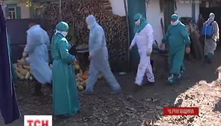 На Черниговщине обнаружили третью вспышку африканской чумы за месяц