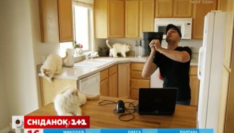 В сети появилось устройство, которое клонирует котов