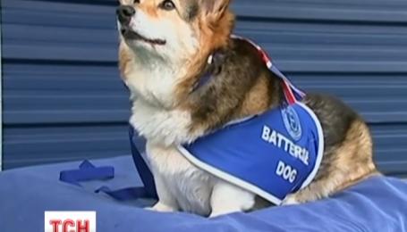 Британська королева відмовляється від улюблених собак