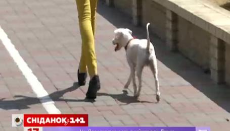 В столице появились собачьи туалеты