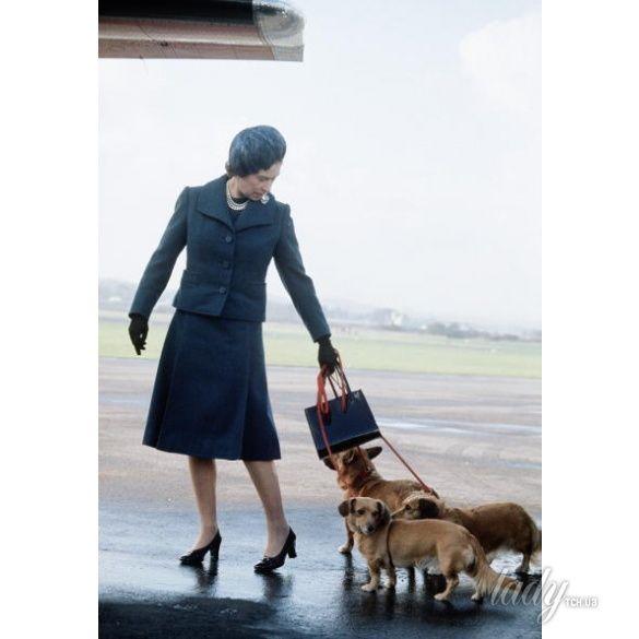 Елизавета II и ее собаки корги _2