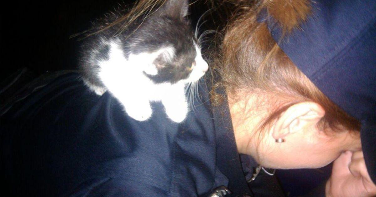 Поліцейські розповіли кумедну історію порятунку кота серед ночі