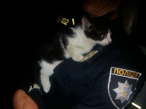 Поліція врятувала кота