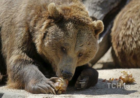 На Харківщині ведмідь напав на працівницю бази відпочинку