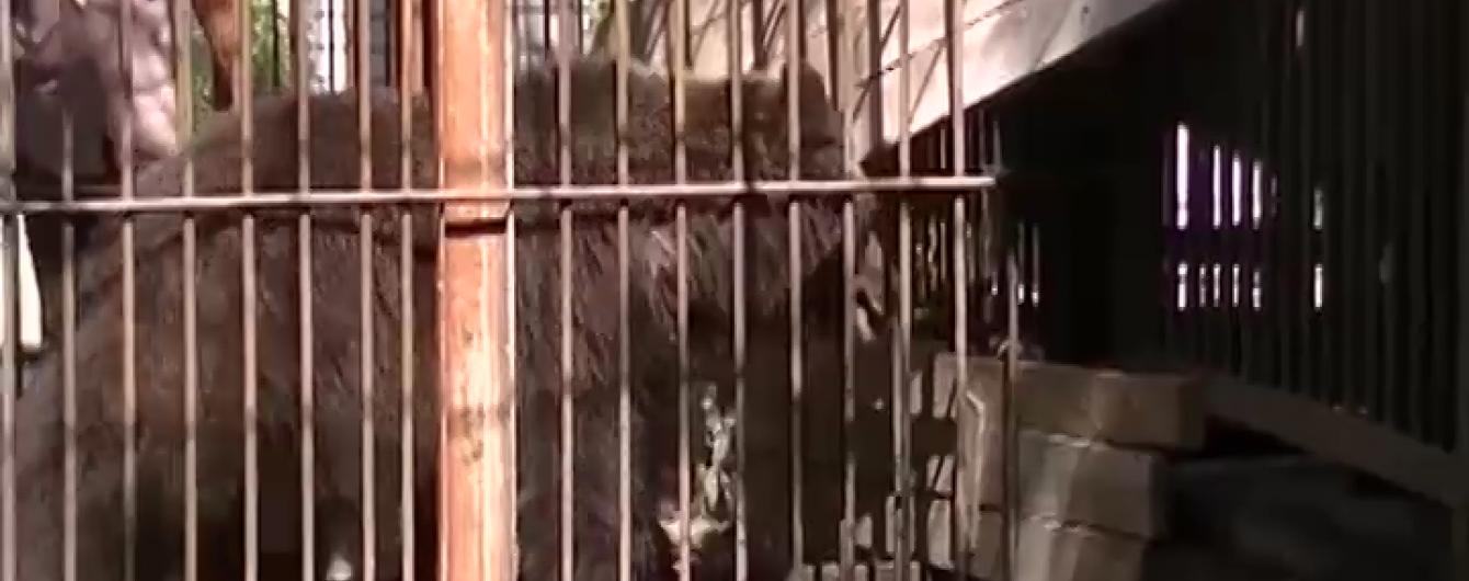 Из-за медведей-беглецов в Херсоне пришлось эвакуировать с пляжа 400 отдыхающих