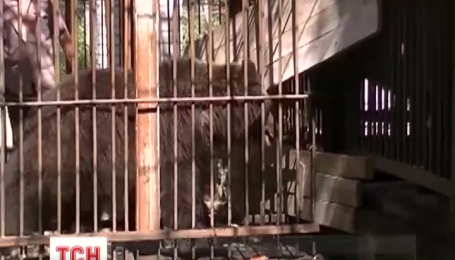 Близько 400 відпочивальників евакуювали з пляжу у Херсоні через утечу ведмедів