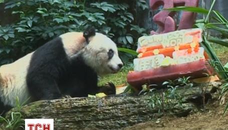 Найстаріша панда на планеті потрапила до Книги рекордів Гіннеса