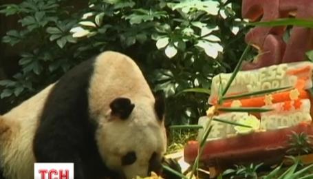Самая старая в мире панда отметила свой 37 день рождения