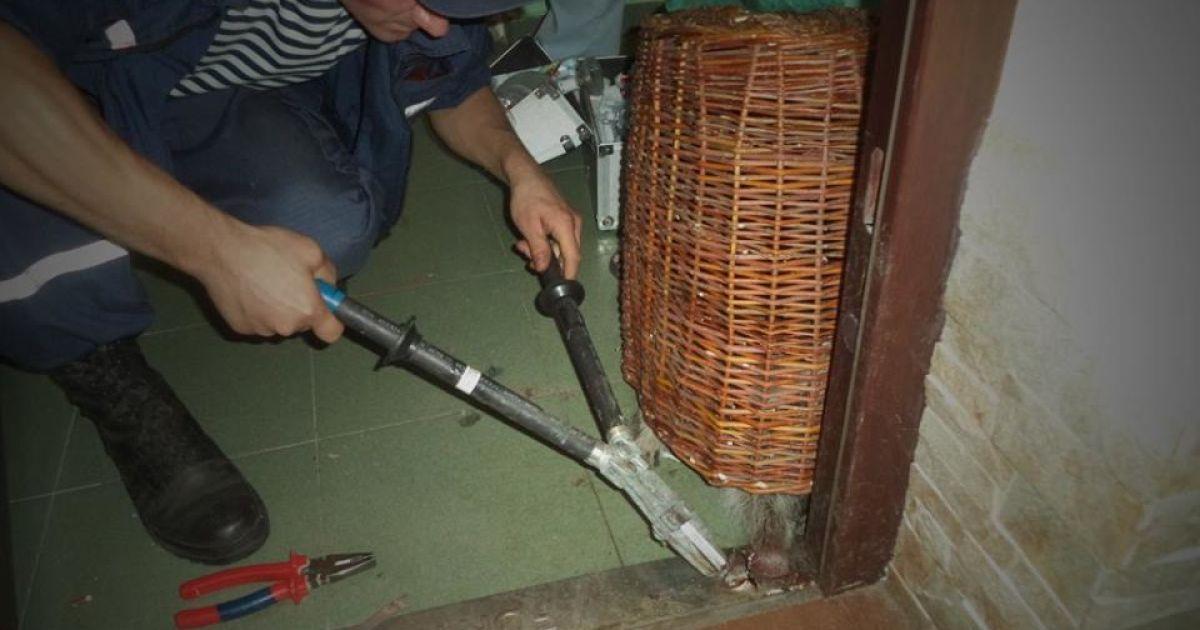 Тварь, которая копалась в домашних вещах, совершенно случайно попала в ловушку металлической коробки от входных дверей