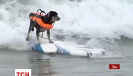 В американском Сан-Диего прошли соревнования по серфингу для собак