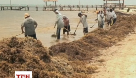 Гигантские массы водорослей забили пляжи Мексики