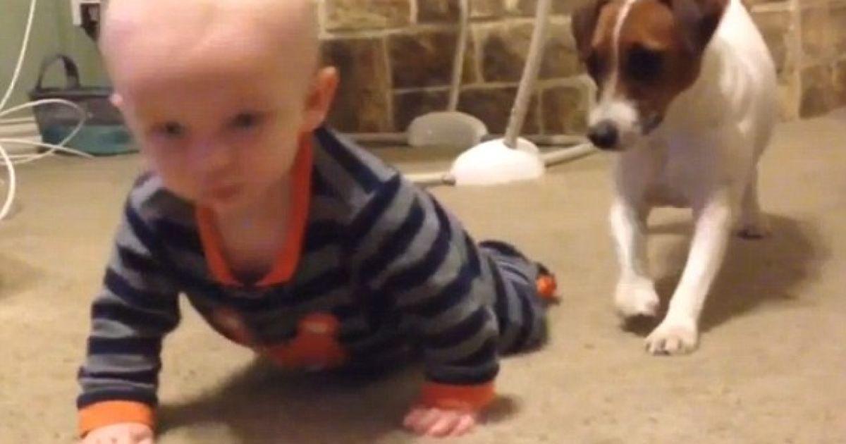 Собака учит малыша ползать