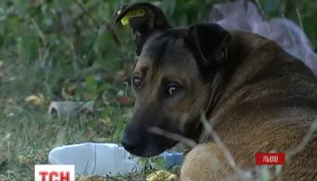 Во Львове начали чипировать бездомных собак