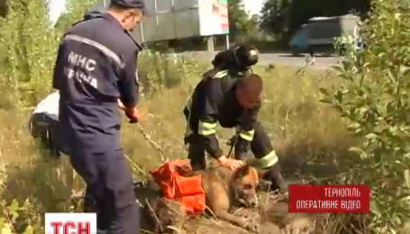 В Тернополе спасатели доставали пса из канализации