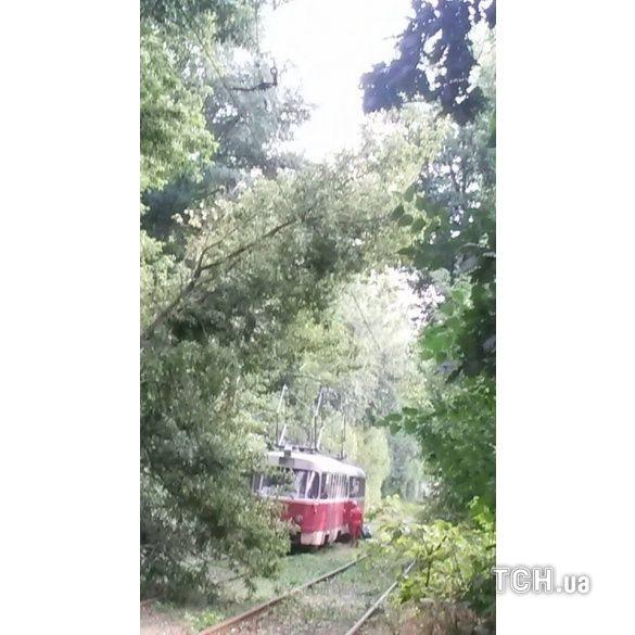 трамвай у пущі