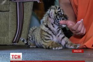 В Николаеве маленького тигренка из зоопарка выкармливает собака