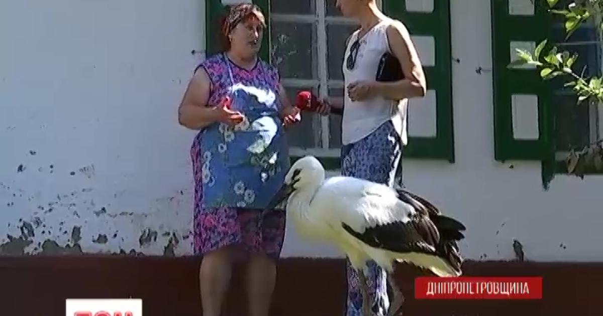 Одні стріляють, інші рятують: у селі на Дніпропетровщині врятували від голоду лелеченя Васька