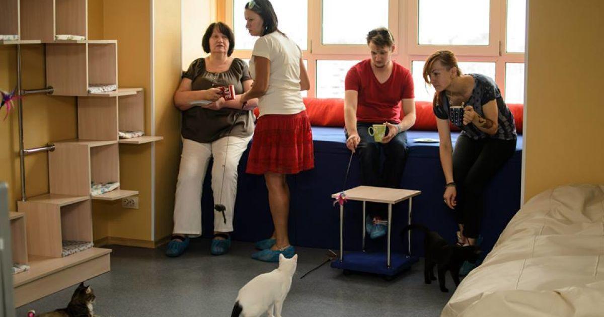 Посетителям заведения будут позволять играть с котиками @ facebook.com/kotokafelapa