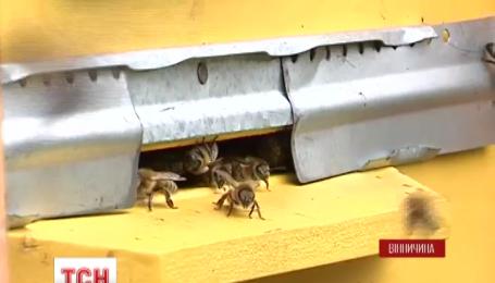 В Винницкой области волонтеры при помощи пчел лечат участников АТО и демобилизованных военных