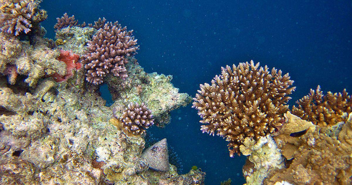 Большой Барьерный риф, Австралия @ flickr.com
