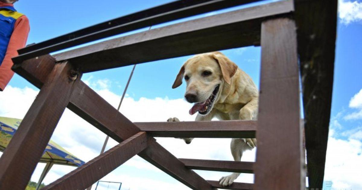 Собаки допоможуть силовикам пройти реабілітацію @ УНІАН