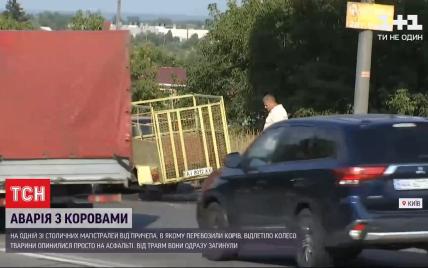 На швидкості відлетіло колесо: в Києві посеред траси загинуло двоє корів