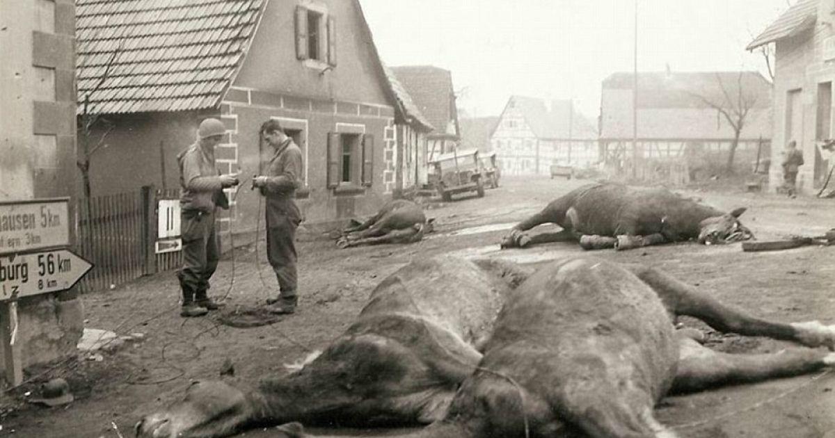 Четверо лошадей, которые принадлежали немецким артиллеристам лежат мертвые посреди улицы. На этой же улице были убиты пятеро немецких солдат. @ Argunners