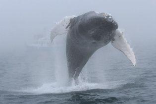 Возле Канады турист зафиксировал впечатляющее появление огромного кита в нескольких метрах от себя