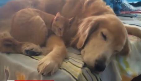 Пользователей тронула дружба собаки и котенка. Смешной интернет