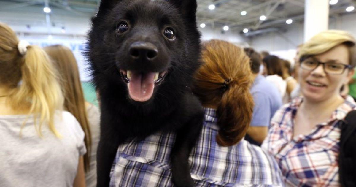 Пес улыбается на Международной выставке собак всех пород в Киеве @ УНИАН