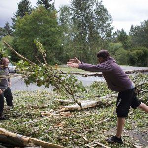 Поваленные деревья, побитые машины и сотни тысяч евро убытков. Варшавой пронесся разрушительный ураган