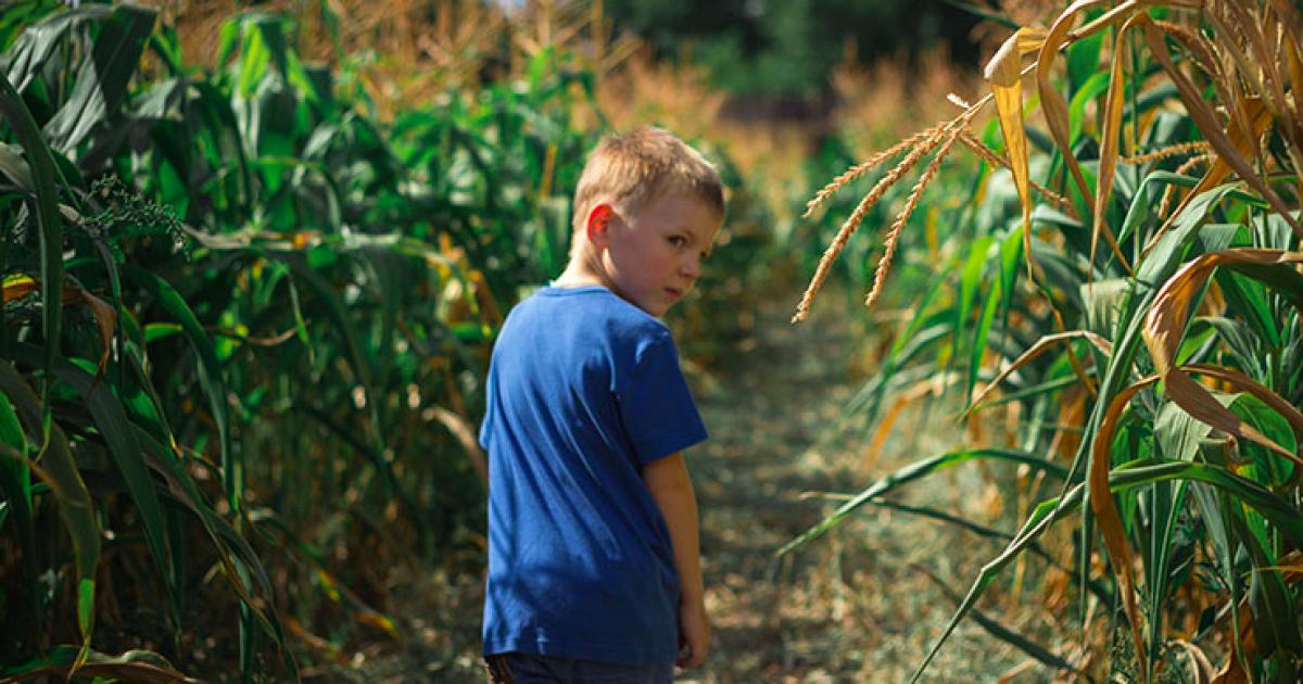 Лабиринт в кукурузе — это традиционная американская забава, которая проводится чуть ли не в каждом штате на фермах накануне праздника урожая. @ hmarochos.kiev.ua