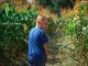 Лабиринт в кукурузе — это традиционная американская забава, которая проводится чуть ли не в каждом штате на фермах накануне праздника урожая.