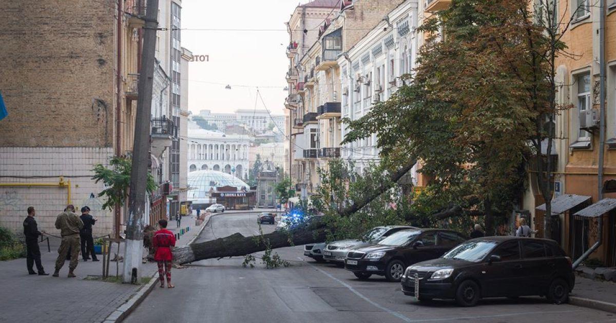 Огромное дерево рухнуло на Малой Житомирской @ facebook.com/sergii.morgunov