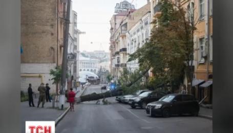 У центрі Києва дерево зранку зупинило рух транспорту