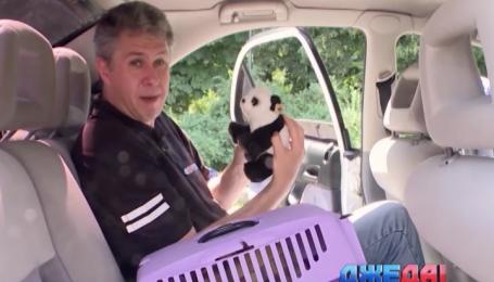 Как транспортировать животных в машине