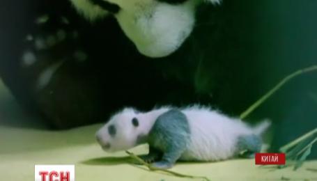 В китайском зоопарке города Гуанчджоу впервые показали новорожденного детеныша панды